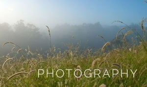 Photography 1 300x179 - Photography